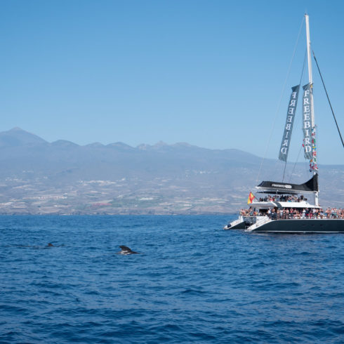 Freebird One es el mayor catamarán en Canarias