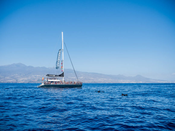 Image of Freebird catamaran during the cruise in Tenerife