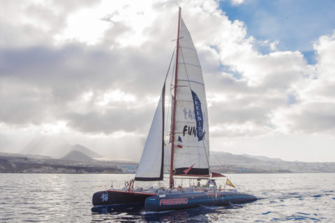 Catamaran cruises in Tenerife - Freebird F13