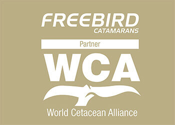 Freebird Catamaran - World Cetacean Alliance Partner