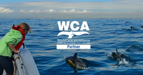 Freebird joins the World Cetacean Alliance