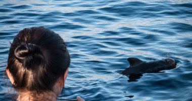 Guide To Whale And Dolphin Watching On Tenerife