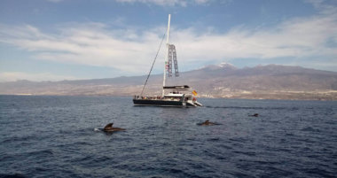 Everything About Tenerife Whale & Dolphin Watching Trips