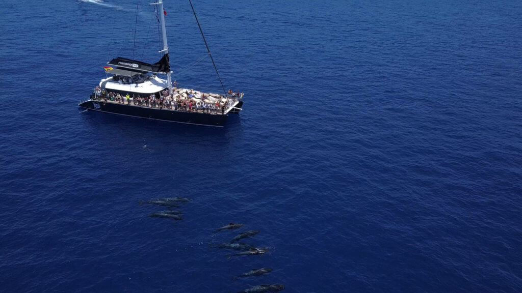 Avistamiento de Ballenas Piloto