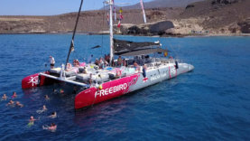 Whale watching excursion in Tenerife, with Freebird Catamaran