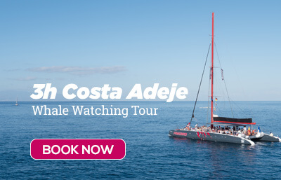 3h Whale Watching tour in Costa Adeje