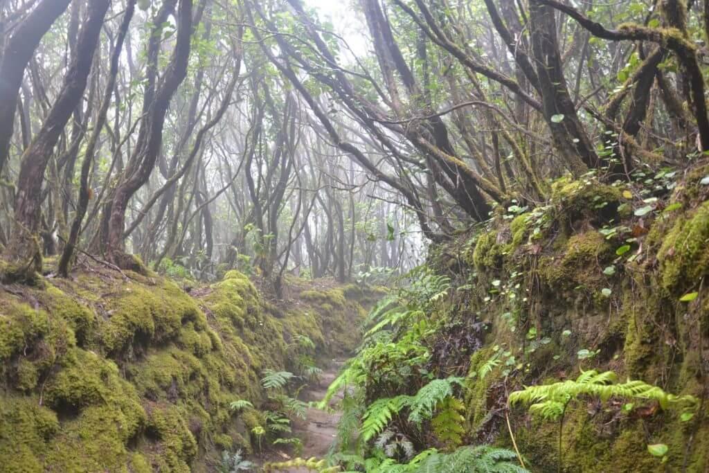 Reserva Natural Integral de El Pijaral, Noreste de Tenerife