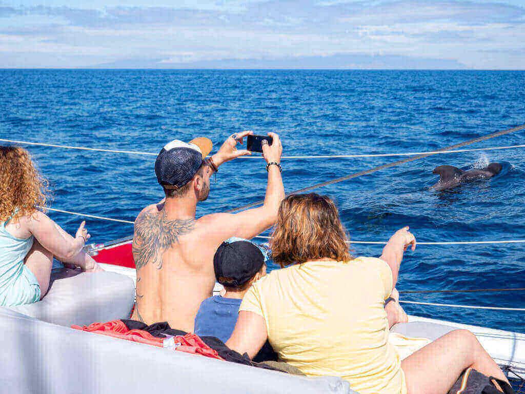excursiones de avistamiento de cetáceos en Tenerife