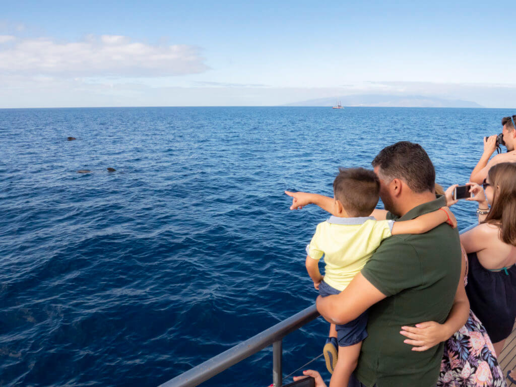 Avistamiento de cetáceos por los Gigantes y la Bahía de Masca