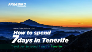 How to spend 7 days in Tenerife