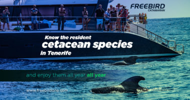 Know the resident cetacean species in Tenerife